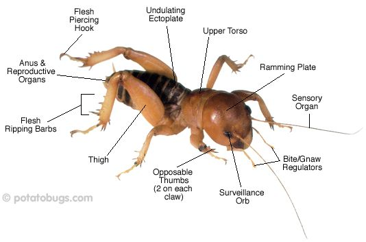 Potatobugs.com > Articles > Potato Bug Parts